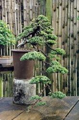 cascade-juniper-sharpened
