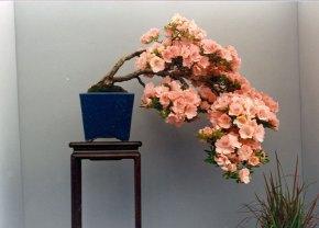 cascade-wakabeasu