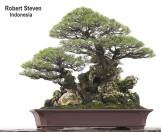 casuarina-equisetifolia-r-steven