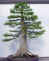 cypressguidry