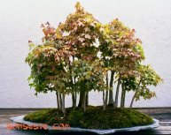 forest4b-1