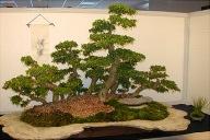 fukienforest