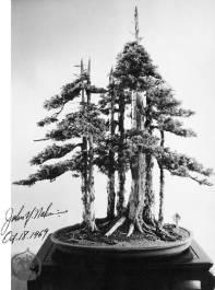 Goshin_tree-c