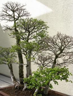 Imagem2-4