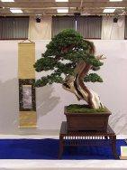 Jan 2006 Noelanders trophy 2006 13