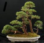 juniper-bush-paul