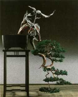 Juniperus014