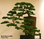 World Bonsai Convention2009