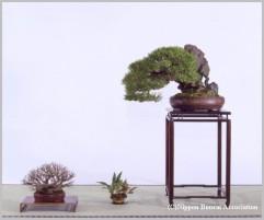 kuromatsu209