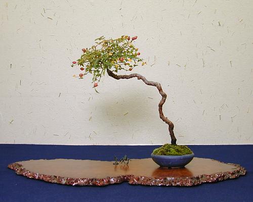 Literati style bonsai for Literati bonsai gallery