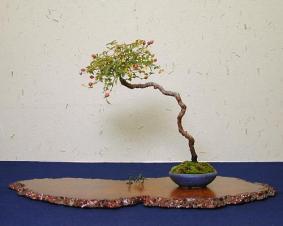 Literati style bonsai