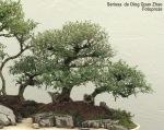 Bonsaï & Penjing – Snow rose – Serissa Japonica – Rubiaceae –25