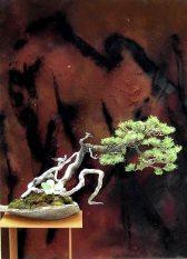 Pinus%20bruin_jpg