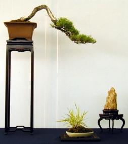 Pinus3