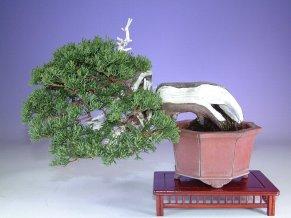 shimpaku156
