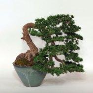 Tree_big_8