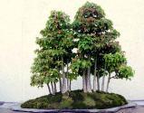 tridentforest-1