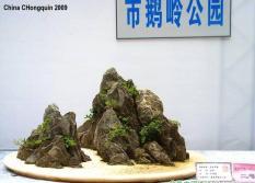 2009 Bonsai