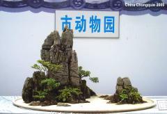 2009 Exhibition Bonsai