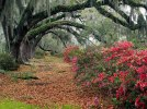 azaleas_and_live_oaks2c_magnolia_plantation2c_charleston2c_south_carolina