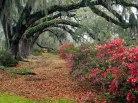 azaleas_and_live_oaks2c_magnolia_plantation2c_charleston2c_south_carolina