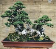 bonsai-raft
