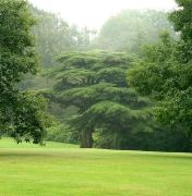 cedrus%20at%20tatton%20park%20long%20view%20aug04%20300