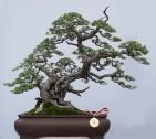 ChengHo6