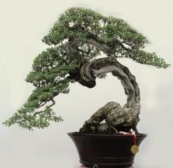 ChengHo7