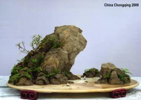 Chongqing Bonsai