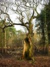 hollow_oak_norfolk_170204