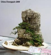 Landscape Bonsai