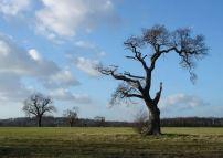 Maidenhead%20Berkshire%204