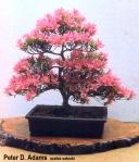 Moyogi 2