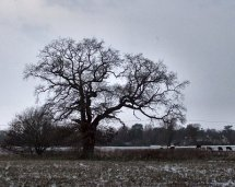 Oak%20at%20Narborough10%20400