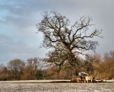 Oak%20at%20Narborough4%201205%20500