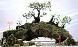 penjing-bonsai-exhibition-07