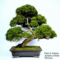 Peter Adams02