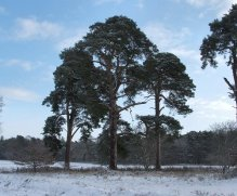 Pines%20at%20Narborough%20500