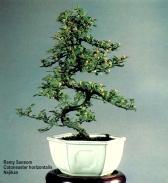 Remy Sansom 6 - Nejikan