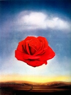 rosa_salvador-dali