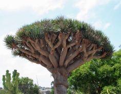 Socotra_Island_07
