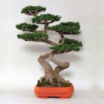 Tree_big_4
