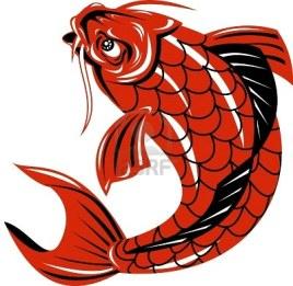 4448426-carpa-koi-pesce