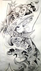 koi_carp_sketch