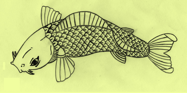 Koi fish drawing by kurttepes aido bonsai for Large coy fish
