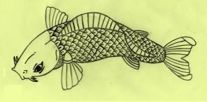 koi_fish_drawing_by_kurttepes