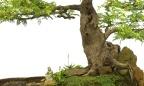 Captura de Tela 2012-02-24 às 00.13.56.png