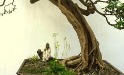 Captura de Tela 2012-02-24 às 00.21.56.png