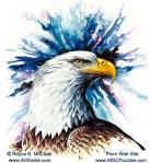 american_bald_eagle_head_1B